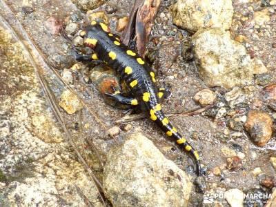 Valle del Ambroz-Sierra de Bejar - Gredos; viaje senderismo;excursion desde madrid